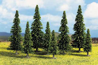 25 Spruce Trees